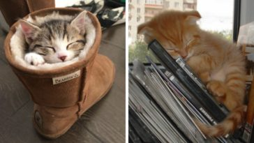 Featured-Cats-Sleep-Everywhere