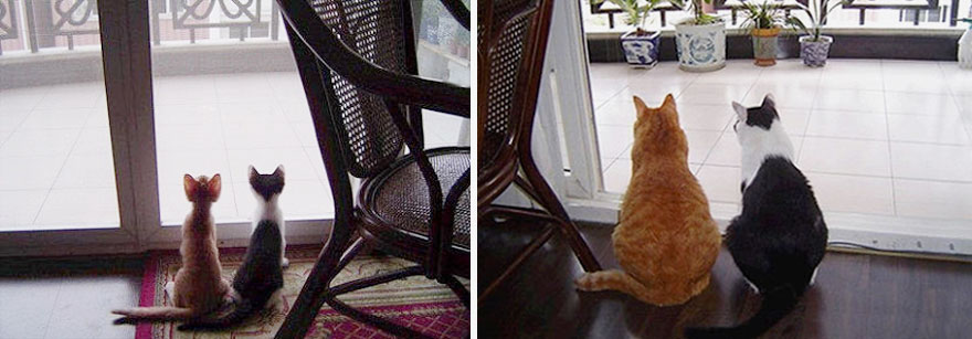 before-and-after-growing-up-cats-1