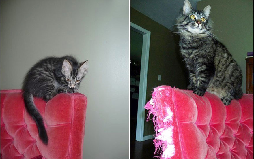 before-and-after-growing-up-cats-10