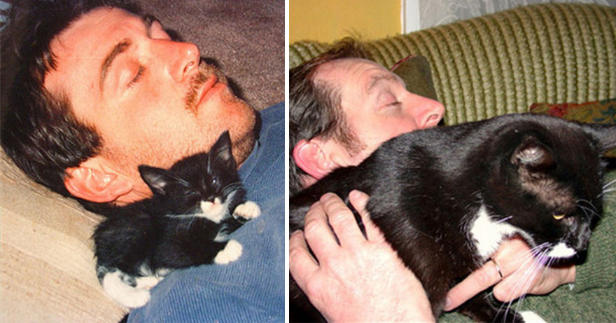 before-and-after-growing-up-cats-14