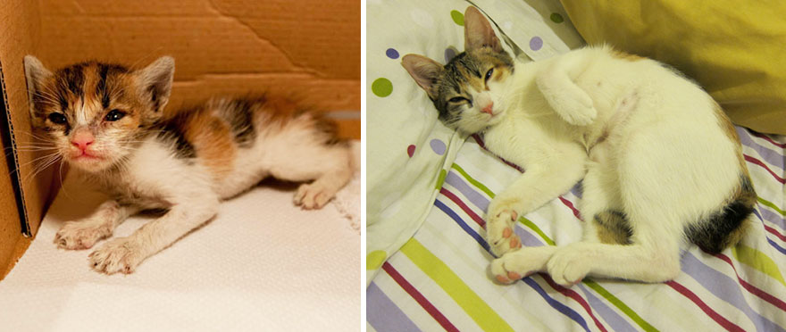 before-and-after-growing-up-cats-16