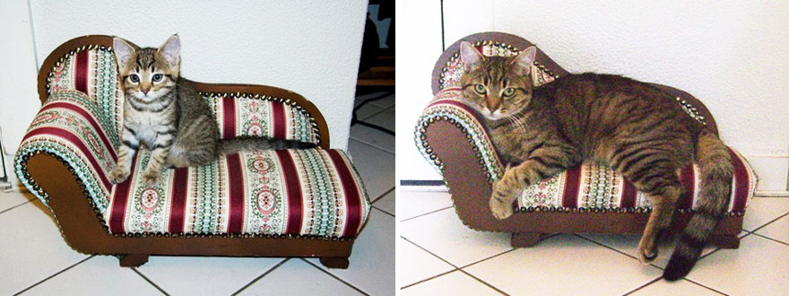 before-and-after-growing-up-cats-17