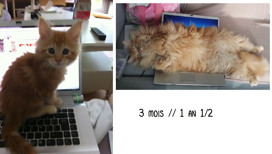 before-and-after-growing-up-cats-20