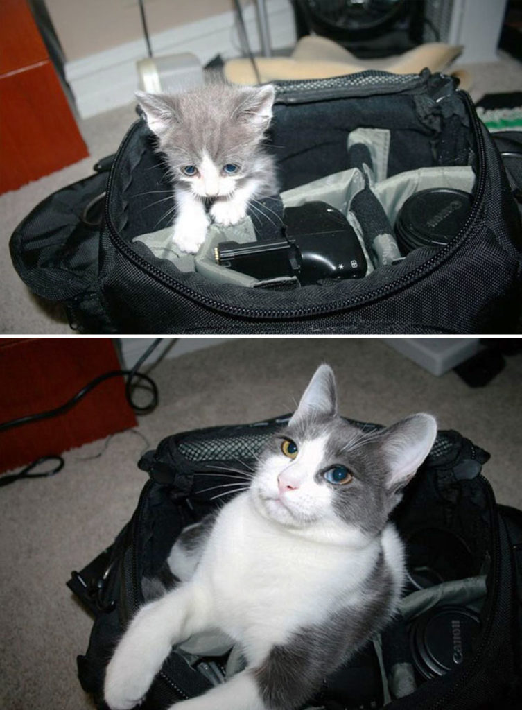 before-and-after-growing-up-cats-9