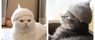 cat-fur-hat-feature