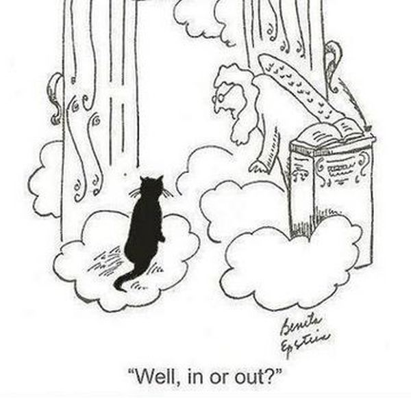 life-w-cats-20