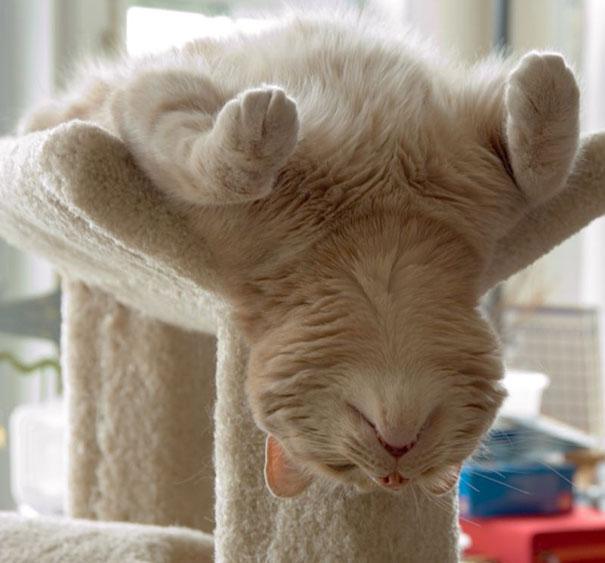 sleepy-kitty-02