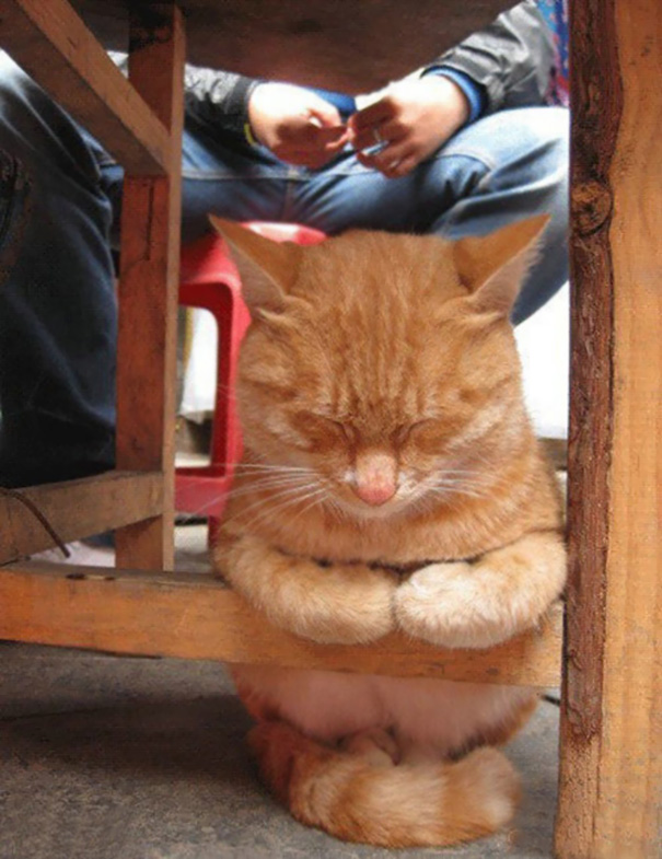 sleepy-kitty-15