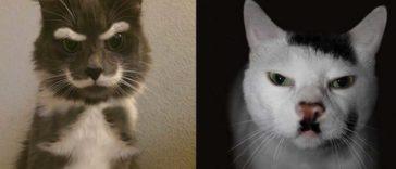 featured-unique-cat-fur-fb