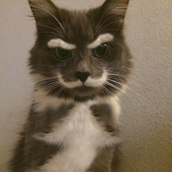 unqie-cat-fur-1