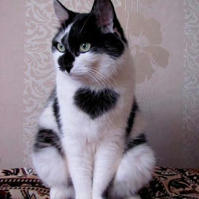 unqie-cat-fur-11