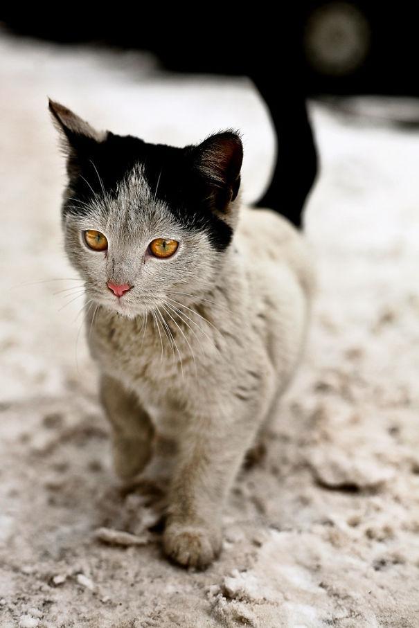 unqie-cat-fur-12