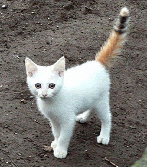 unqie-cat-fur-13