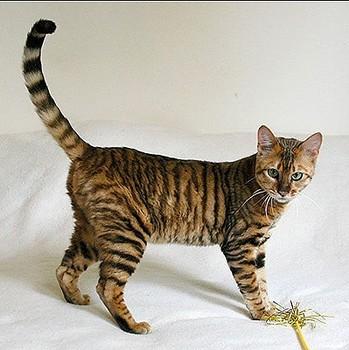 unqie-cat-fur-18