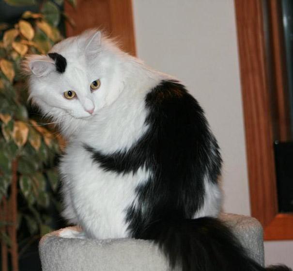 unqie-cat-fur-19