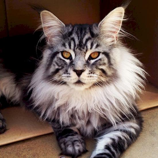 unqie-cat-fur-27