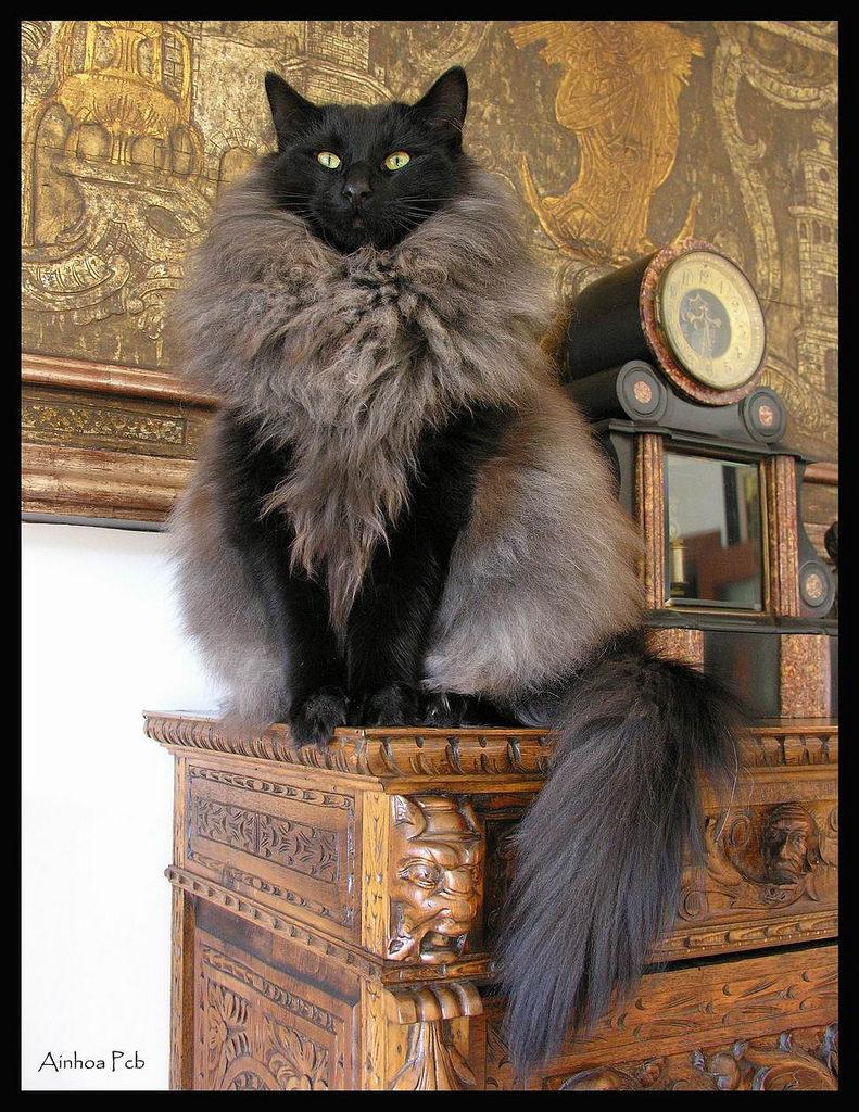 unqie-cat-fur-28