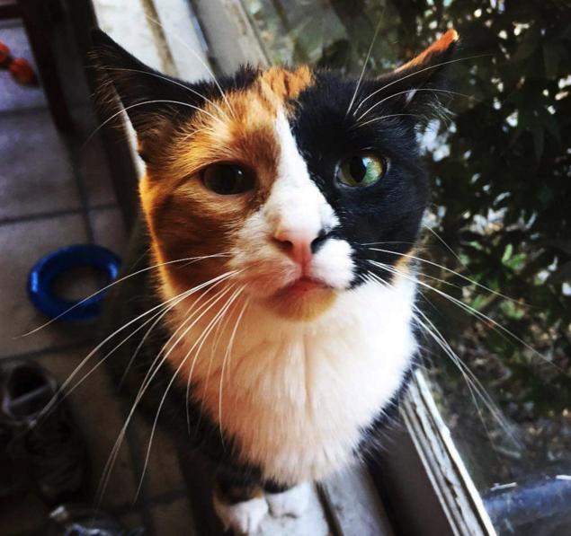 unqie-cat-fur-31