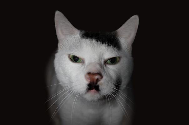 unqie-cat-fur-5