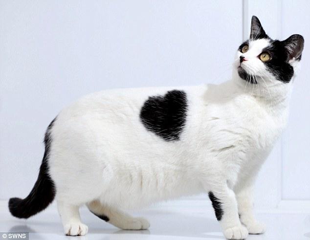 unqie-cat-fur-8