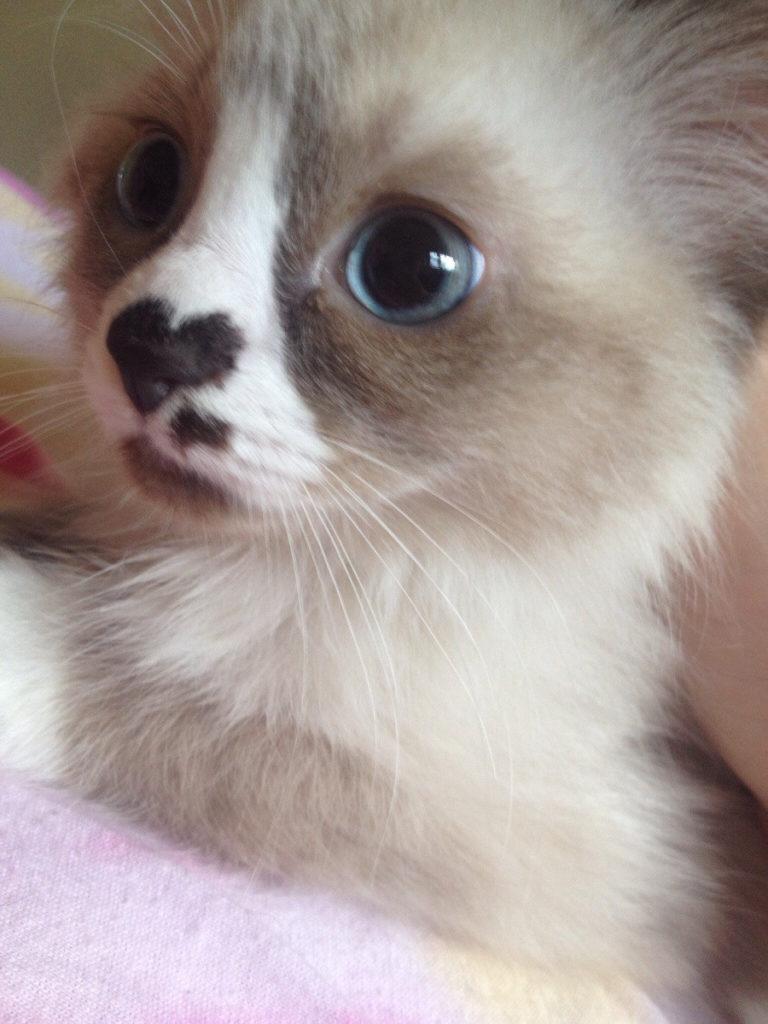 unqie-cat-fur-9