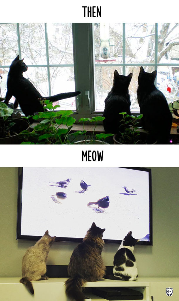 Cats-then-now-funny-technology-change-life-14