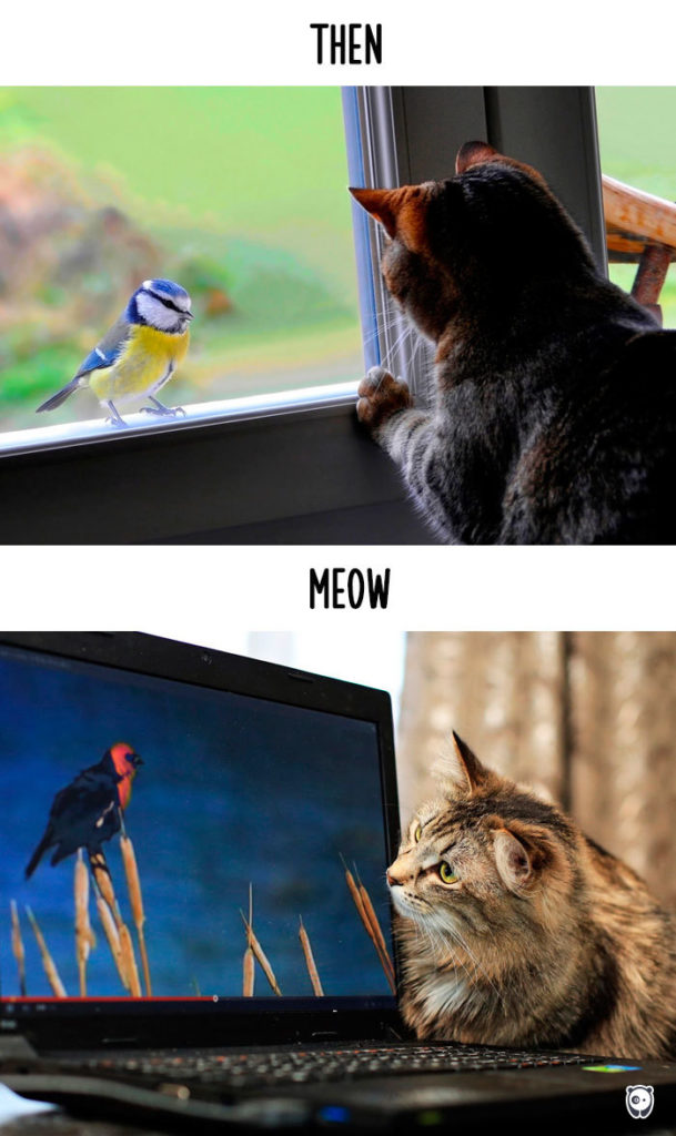 Cats-then-now-funny-technology-change-life-5