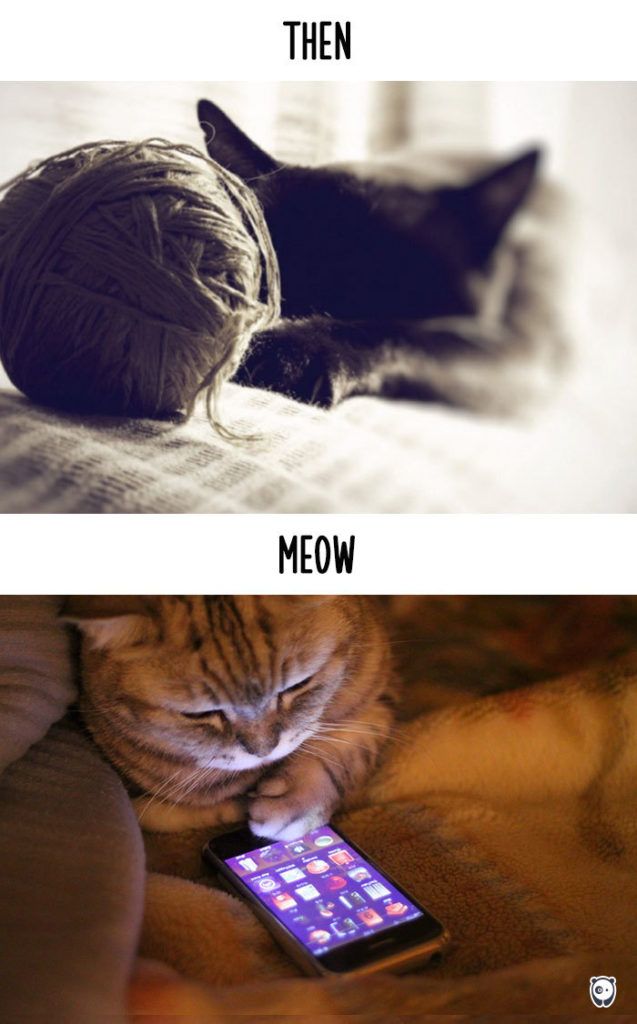 cats-then-now-funny-technology-change-life-10