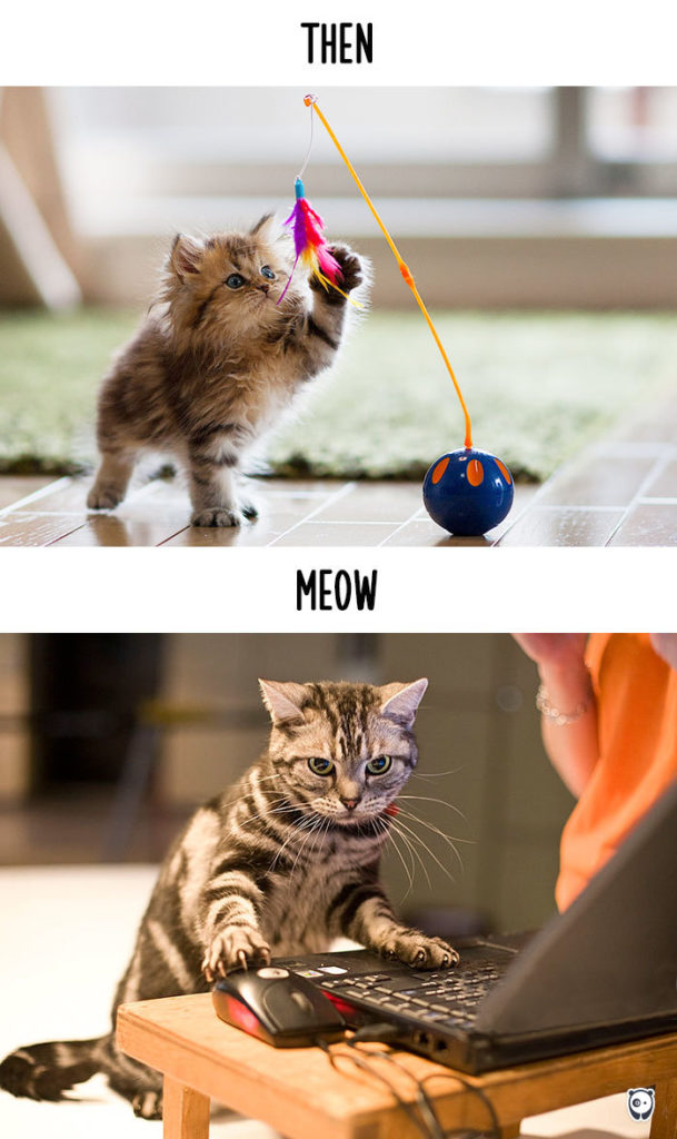 cats-then-now-funny-technology-change-life-15pg