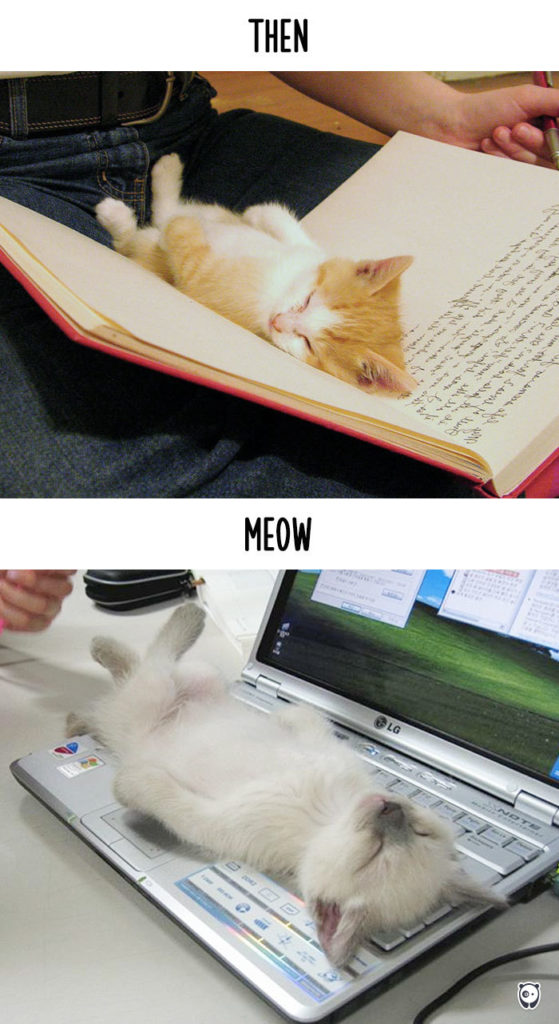 cats-then-now-funny-technology-change-life-2