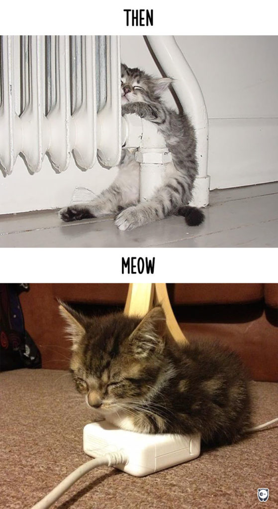 cats-then-now-funny-technology-change-life-3