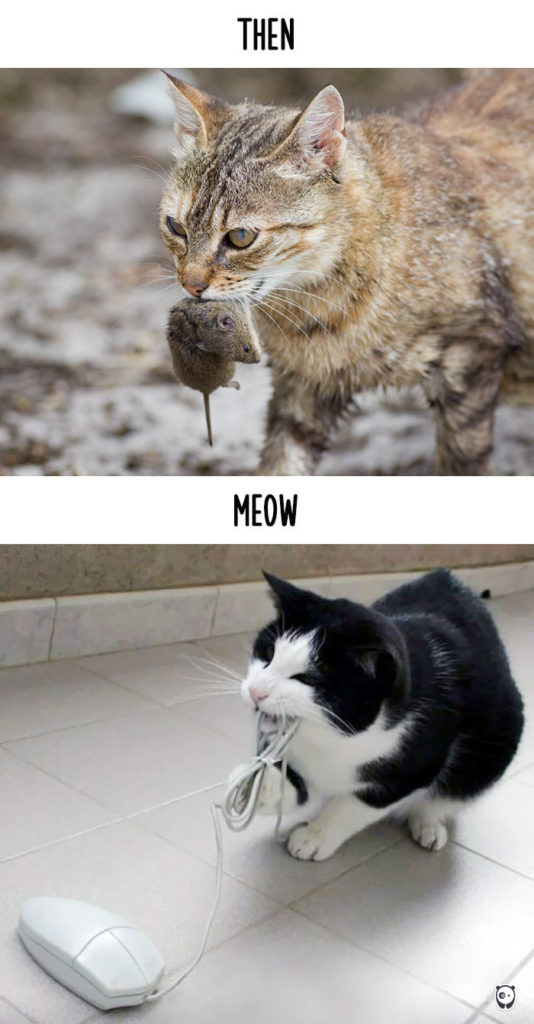 cats-then-now-funny-technology-change-life-4