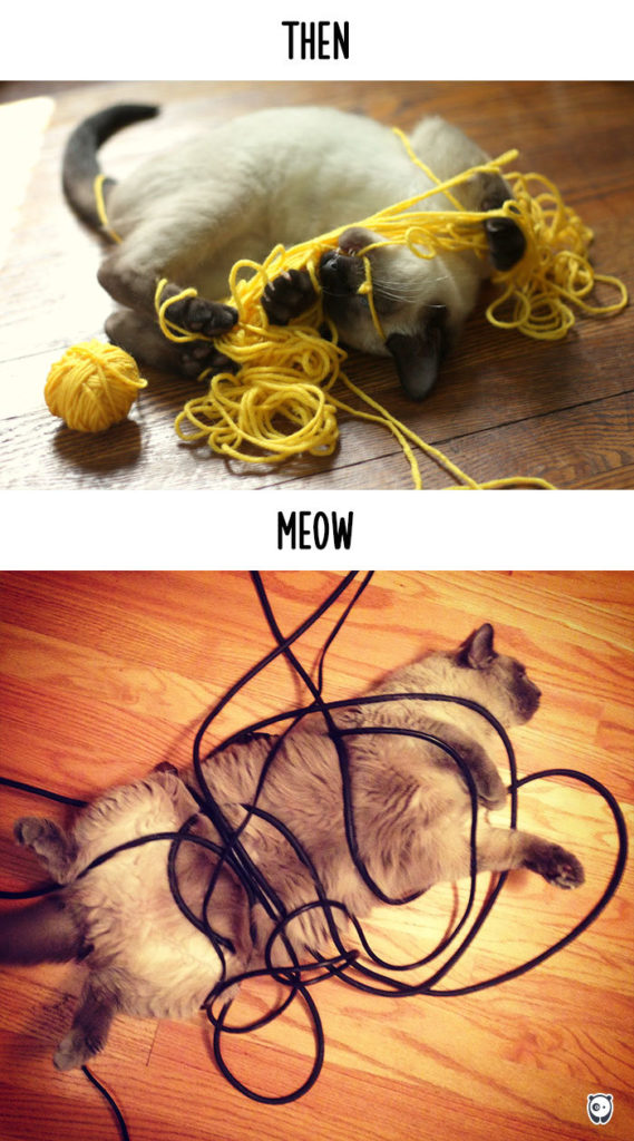 cats-then-now-funny-technology-change-life-6jpg