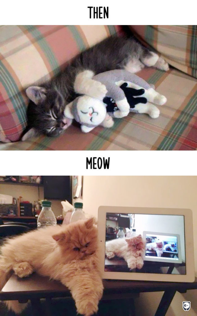 cats-then-now-funny-technology-change-life-8