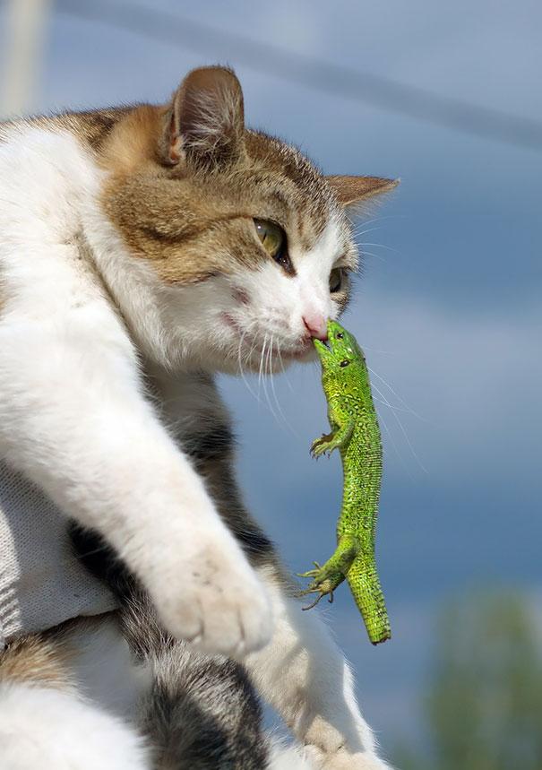 funny-cat-fails-10
