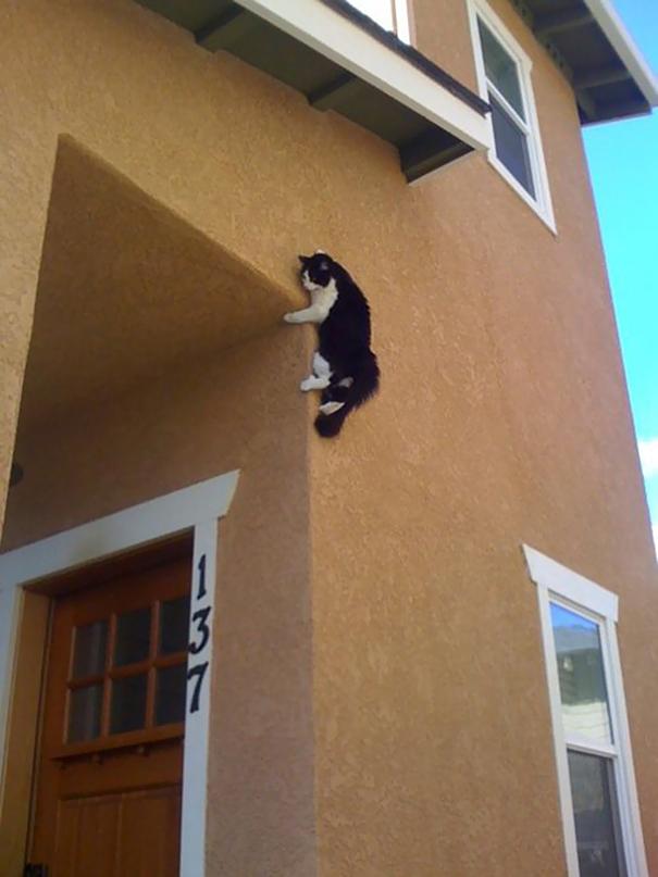 funny-cat-fails-11