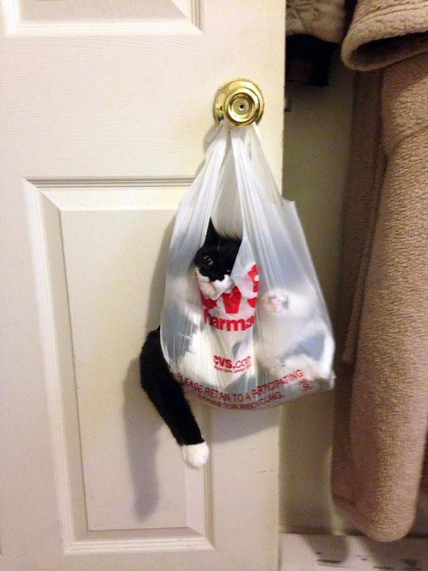 funny-cat-fails-12