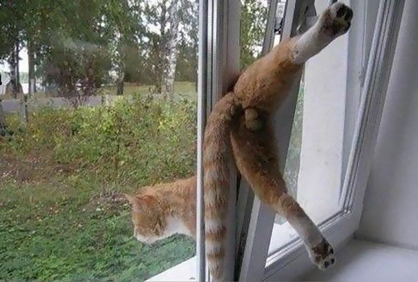 funny-cat-fails-13