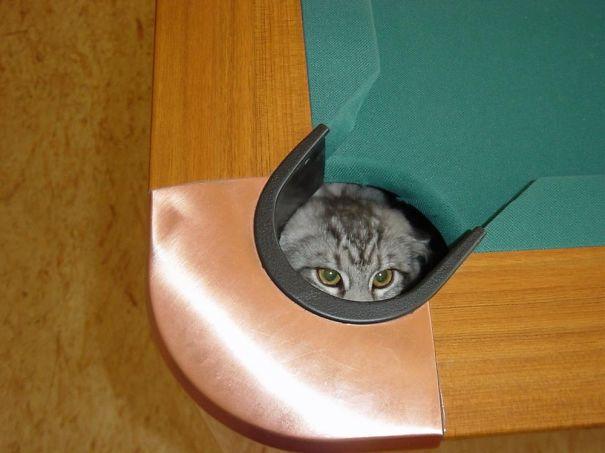 funny-cat-fails-18