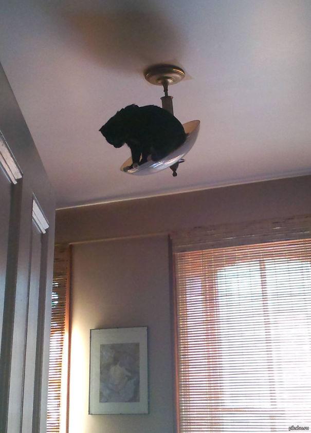 funny-cat-fails-20