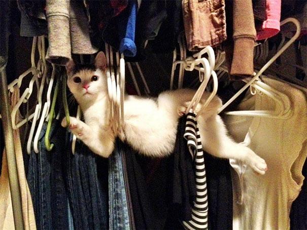 funny-cat-fails-23