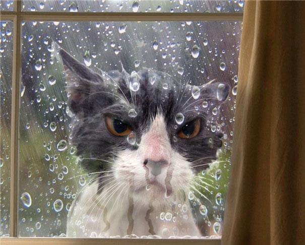 funny-cat-fails-3
