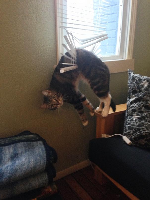 funny-cat-fails-4