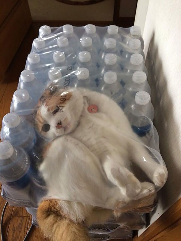 funny-cat-fails-5