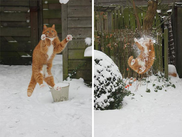 funny-cat-fails-8