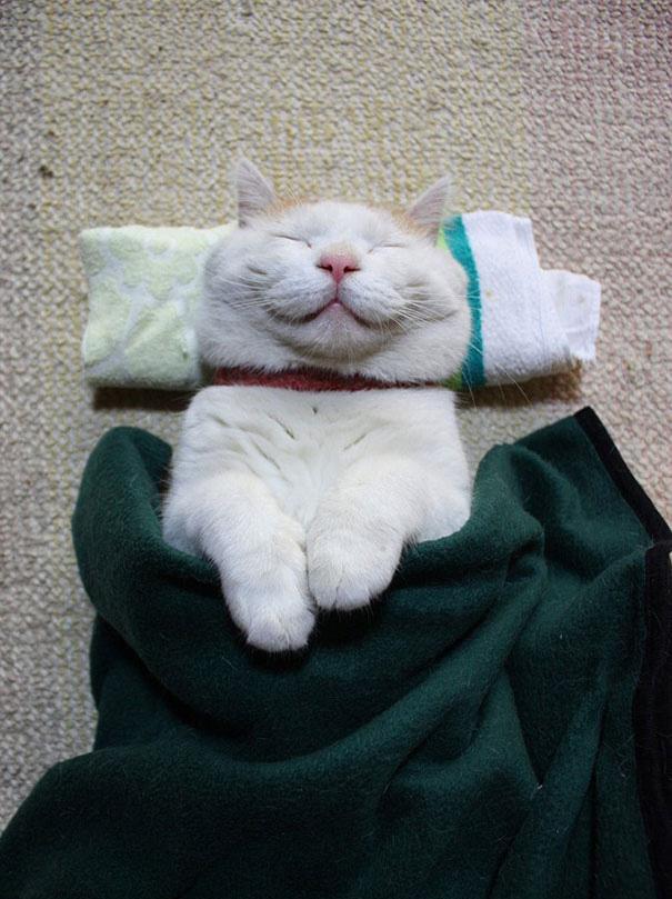 smiling-cat-funny-10