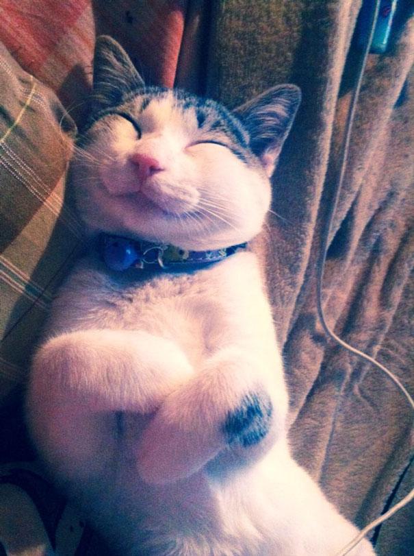 smiling-cat-funny-6