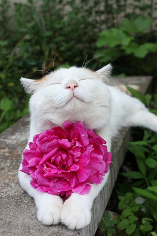 smiling-cat-funny-7