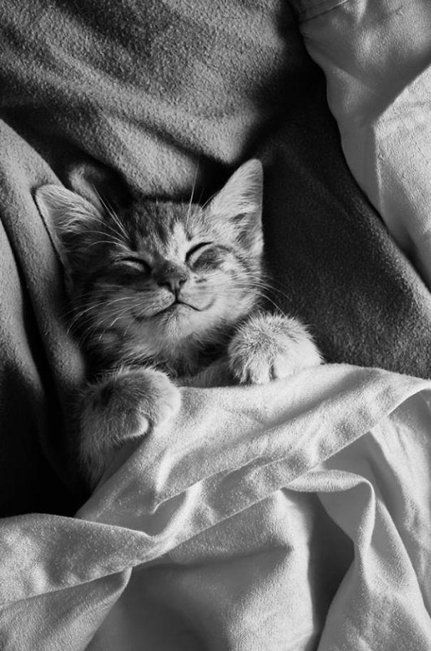 smiling-cat-funny-8