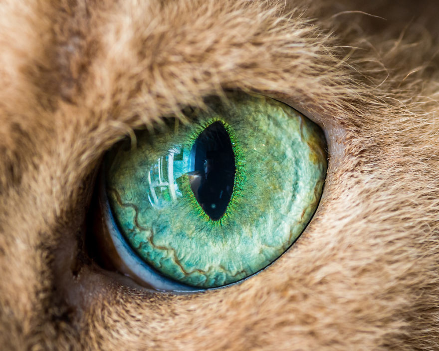 I-Take-Hypnotizing-Macro-Shots-Of-Cats-Eyes-Up-Close-1 (1)